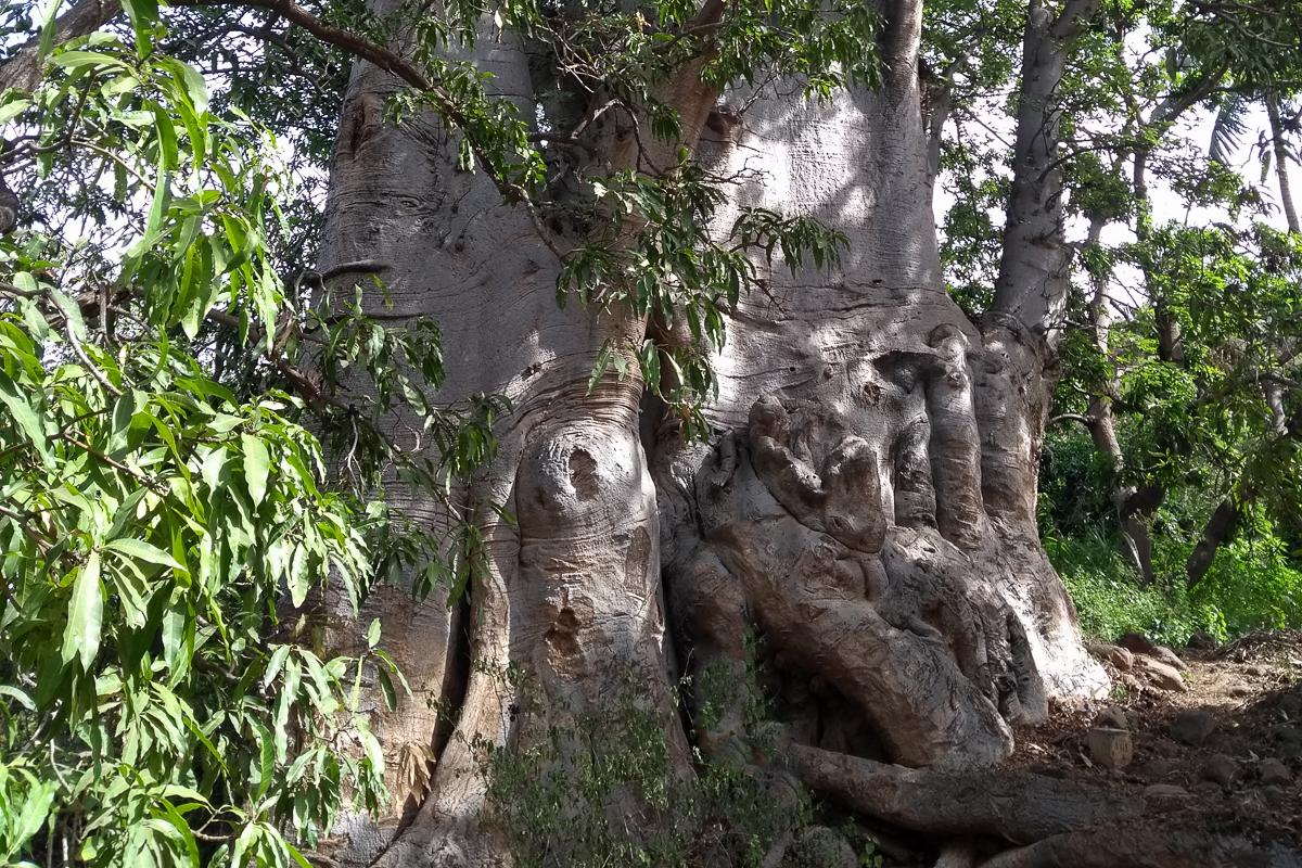 wanderung zum baobab baum aquarius 39 photoblog. Black Bedroom Furniture Sets. Home Design Ideas